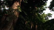 Tree Trunk Hero And Dense Understory Foliage In Rainforest Jungle