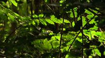Beautiful Dappled Light On Leaves In Rainforest