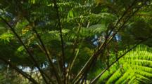 Tree Fern Fronds Side View