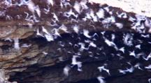 Zoom Of Cave Mouth, Bats Emerging