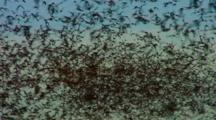 Millions Bats Fill Sky Heading Away From Cave