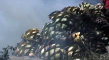 Fabrication Of Mezcal-Burning Agave Plants