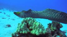 Camera Approaches Close To Eel, Eel Swims Away