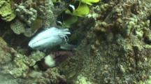Variety Reef Fish Feeding On Discarded Fish Carcass