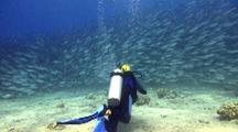 Baitball--Diver Approaches Huge School Akule(Big Eye Scad)