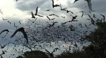 Millions Mexican Free-Tailed Bats Pour From Mouth Of Cave