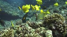 Assortment Of Reef Fish Feeding On Coral Algae