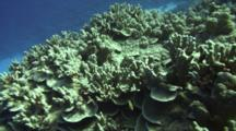 Swim-By, Showing Healthy Coral Growth