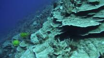 Camera Cruises Over Healthy Plate And Finger Coral