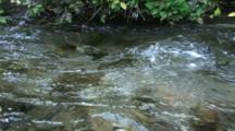 Clear, Cool Spring Flows Over Shallow Bottom Past Bank Plants.  Very Nice Sound!