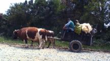 Ox Drawn Cart Hauls Wool And Milk From Farm
