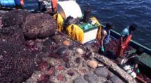 Net Bags Of Kelp, Pan To Kelp Boat -- Chile, Isla Chiloe
