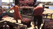 Workers Bring Up Net Bag Of Kelp From Hold Of Boat
