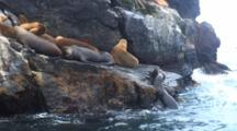 S. American Sea Lion Colony On Rocky Island-Isla Choros