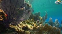 Camera Tracks Along Reef To Reveal Hydrocline (Divers)