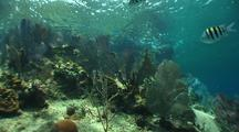Pan Shot Of Reef Next To Hydrocline Where Reef Is Healthy