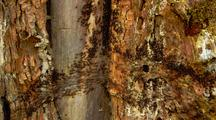 Termite Motorway Crossing A Tree Trunk.