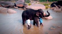 Tracking Shot Of Elephant Handlers Washing Their Steed In Hampi India. Set In The River That Runs Through The Prehistoric Landscape Of Hampi.