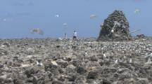 A Scientist Works On A Weather Station Erected On A Deserted Island, Seabirds Fly Around