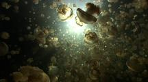 Swimming Through Thousands Of Jellyfish Backlit By The Sun