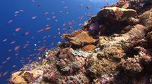Colourful Coral Reef With Tropical Fish