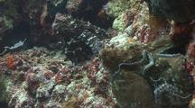 Mating Octopus, Part Of Sequence