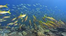 Multitude Of Fish Evade Predatory Attacks