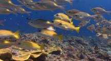 Huge Diversity Of Reef Fish Swim Over A Colorul Coral Reef