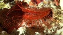 Medium Shot Of File Clam Glowing In Underwater Cave
