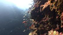 Descending Into Palau's Blue Holes Underwater Cavern