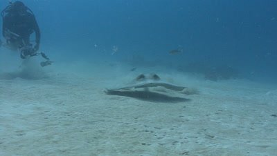 Underwater Photographer and Stingray