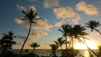 Timelapse of tropical sunrise,ocean and palm trees