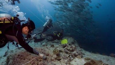 "SCUBA Divers ""Hook in"" at Blue Corner dive site, Palau"