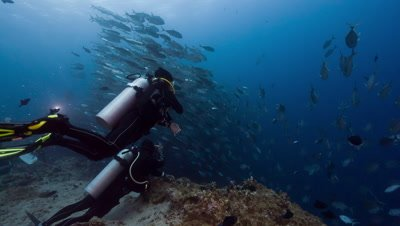 "SCUBA Divers ""Hook in"" at Blue Corner to watch large school of fish"