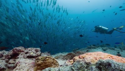 SCUBA Diver and huge school of silver fish in strong current
