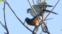Birds Mating Stock Footage