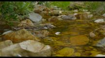 Clear Water Running Over Rocks In A Mountain Stream.