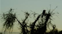 Hornbill Silhouette At Sunrise.