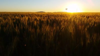 Nature Scenic Landscape Wheat field farming sunset