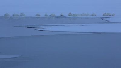 Whooper swans sleeping in the morning,Hokkaido,Japan