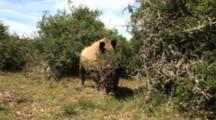 Severely Injured Rhino Poached Alive, Horns Removed
