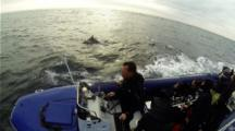 Common Dolphin  Next To Vessel