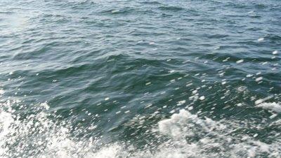 Common Dolphins False Bay 4K