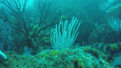Dive Ragged tooth sharks and reef