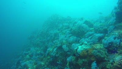 Ragged Tooth Shark Reefdive