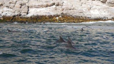 Bottlenose Dolphin African Penguins
