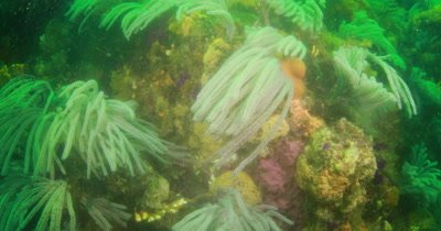 colorful reefs and Ragged tooth Sharks  Algoa Bay Port Elizabeth
