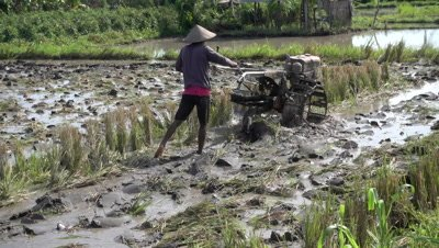 Man plowing a rice field with 2 wheels mud tractor