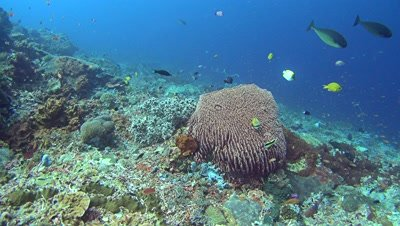 Hard and soft coral reef with huge barrel sponge