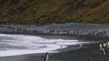 King Penguins (Aptenodytes Patagonicus) And Royal Penguins (Eudyptes Schlegeli) On The Beach On Macquarie Island